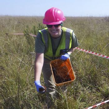 Dung beetles a 'highly viable' option to rehabilitate soil at disused coal mines